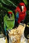 کمپین حمایت از پرندگان: آنها در طبیعت زیباترند