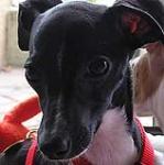 داستان زندگی سگ کوچکی به نام Ester