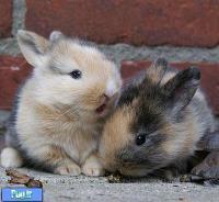 آیا میخواهید چندین خرگوش را باهم نگهداری کنید؟ (ترجمه)