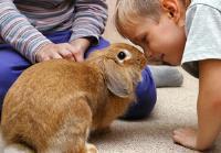 نحوه بر قراری ارتباط در خرگوش ها