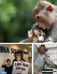 برای نجات جان میمون ها امضا کنید
