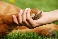 مراقبت از پنجه سگ ها