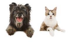 چند نکته کوچک در مورد حیوانات خانگی