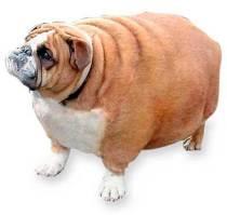 اختلال در عملکرد غده تیروئید در حیوانات خانگی