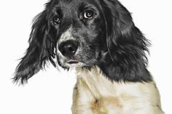 تمامی وسایل مورد نیاز برای نگهداری بهتر از سگ خانگی