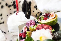 چگونه نیازهای اولیه سگ خود را برطرف کنید!