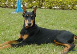 باهوش ترین نژاد سگ
