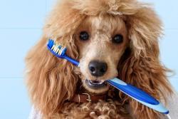 هر آنچه برای سلامت دهان و لثه ی سگ باید بدانید!