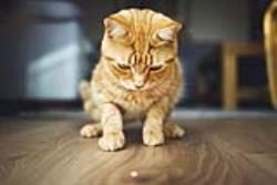 چرا لیزر برای گربه ها جذاب است؟
