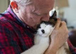 ایا گربه ها صاحب خود را میشناسند؟