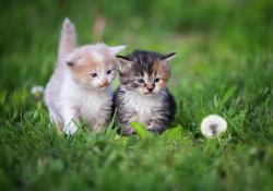 چگونه می توان از دو یا چند گربه کنار یکدیگر نگهداری کرد؟