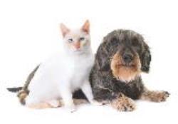 هر آنچه برای دوران پیری حیوانات خانگی باید بدانیم!