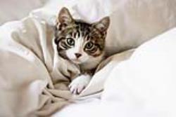 8 نکته مهم که در نگهداری از گربه باید بدانید!