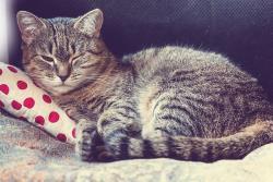 گهداری از گربه برای اولین بار؛ هر آنچه لازم است بدانید!