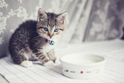 چه وسایلی برای بچه گربه نیاز داریم؟