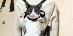 یک کوله پشتی خوشگل گربه ای