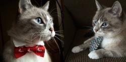 گربه های شیک پوش
