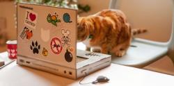 لپ تاپی برای گربه ها