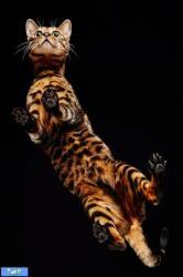 گربه هایی با مزه از نمایی بسیار جالب