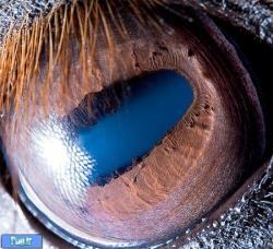 چشم حیوانات از نزدیک