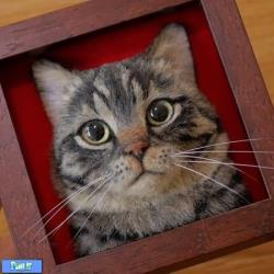 عکس های پورتره از گربه ها