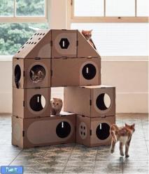 طرح کارتون برای گربه ها