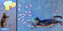 ارزوهایی از جنس گربه