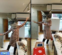 ماسک های کله گنده با طرح گربه