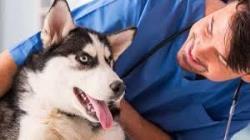 10 حسی که سگ ها می فهمند