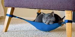تخت بلبلی برای گربه ها